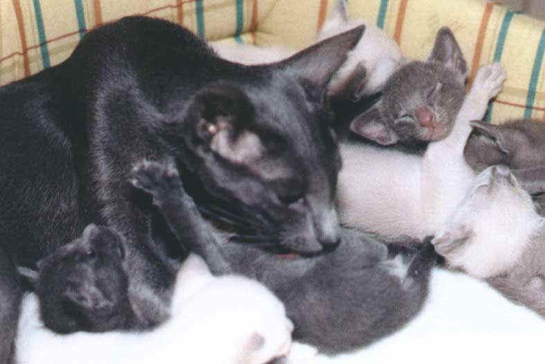Lechage de chatte dans les vestiaires lors du beurette tour - 5 1