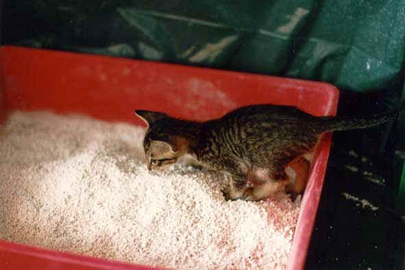 accueillir un chaton de 2 mois